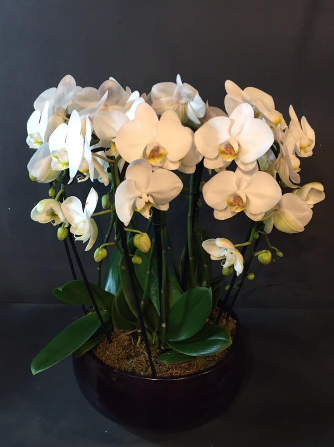 Composition d'orchidées blanches